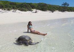 Turtle auf North-West Island