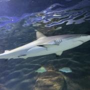 Hai im Sea Life Aquarium